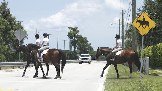 horse crossing