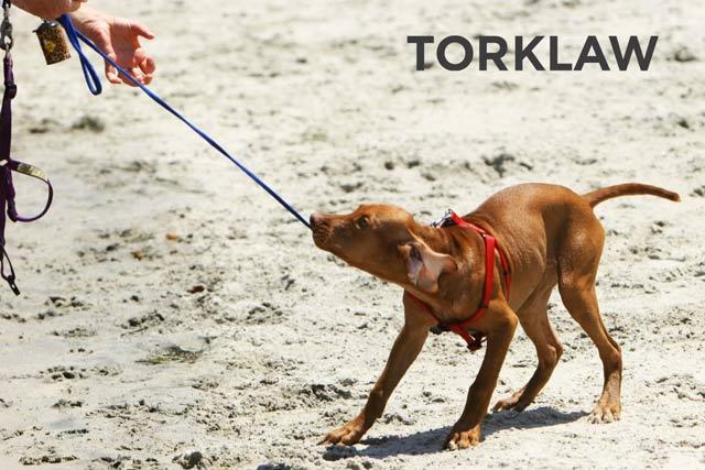 Wag! Dog Bite Injury Lawyers