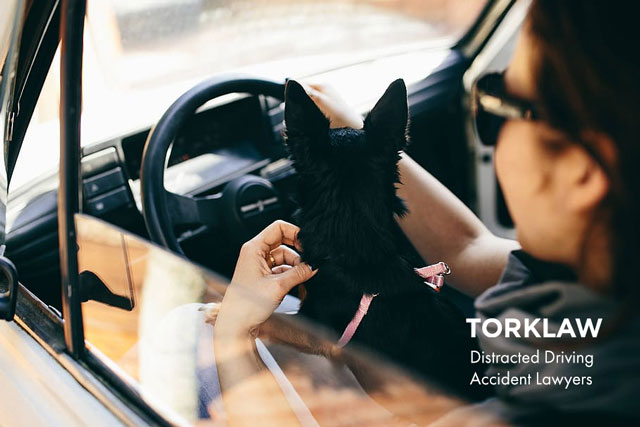 distracted driving accidents - pets