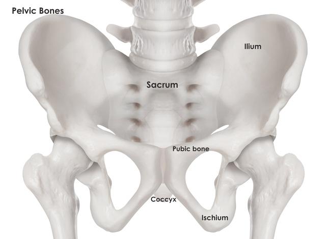 fractured pelvis